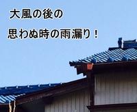 2015-3kasiwaguma02.JPG