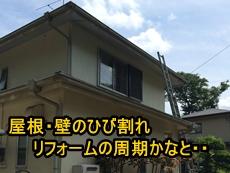 トップ大杉.JPG