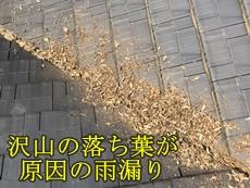 40062k_top.jpg